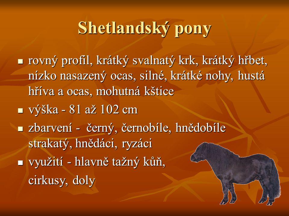 Shetlandský pony rovný profil, krátký svalnatý krk, krátký hřbet, nízko nasazený ocas, silné, krátké nohy, hustá hříva a ocas, mohutná kštice rovný profil, krátký svalnatý krk, krátký hřbet, nízko nasazený ocas, silné, krátké nohy, hustá hříva a ocas, mohutná kštice výška - 81 až 102 cm výška - 81 až 102 cm zbarvení - černý, černobíle, hnědobíle strakatý, hnědáci, ryzáci zbarvení - černý, černobíle, hnědobíle strakatý, hnědáci, ryzáci využití - hlavně tažný kůň, využití - hlavně tažný kůň, cirkusy, doly