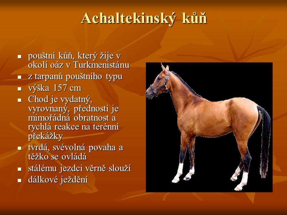 Achaltekinský kůň pouštní kůň, který žije v okolí oáz v Turkmenistánu pouštní kůň, který žije v okolí oáz v Turkmenistánu z tarpanů pouštního typu z tarpanů pouštního typu výška 157 cm výška 157 cm Chod je vydatný, vyrovnaný, předností je mimořádná obratnost a rychlá reakce na terénní překážky Chod je vydatný, vyrovnaný, předností je mimořádná obratnost a rychlá reakce na terénní překážky tvrdá, svévolná povaha a těžko se ovládá tvrdá, svévolná povaha a těžko se ovládá stálému jezdci věrně slouží stálému jezdci věrně slouží dálkové ježdění dálkové ježdění