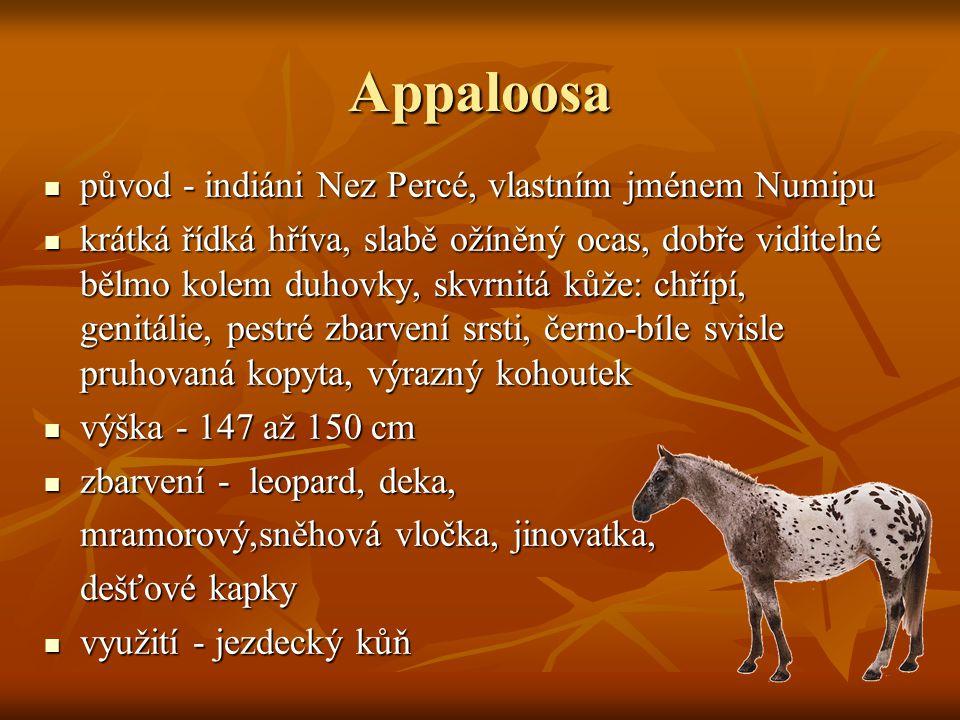 Appaloosa původ - indiáni Nez Percé, vlastním jménem Numipu původ - indiáni Nez Percé, vlastním jménem Numipu krátká řídká hříva, slabě ožíněný ocas, dobře viditelné bělmo kolem duhovky, skvrnitá kůže: chřípí, genitálie, pestré zbarvení srsti, černo-bíle svisle pruhovaná kopyta, výrazný kohoutek krátká řídká hříva, slabě ožíněný ocas, dobře viditelné bělmo kolem duhovky, skvrnitá kůže: chřípí, genitálie, pestré zbarvení srsti, černo-bíle svisle pruhovaná kopyta, výrazný kohoutek výška - 147 až 150 cm výška - 147 až 150 cm zbarvení - leopard, deka, zbarvení - leopard, deka, mramorový,sněhová vločka, jinovatka, dešťové kapky využití - jezdecký kůň využití - jezdecký kůň