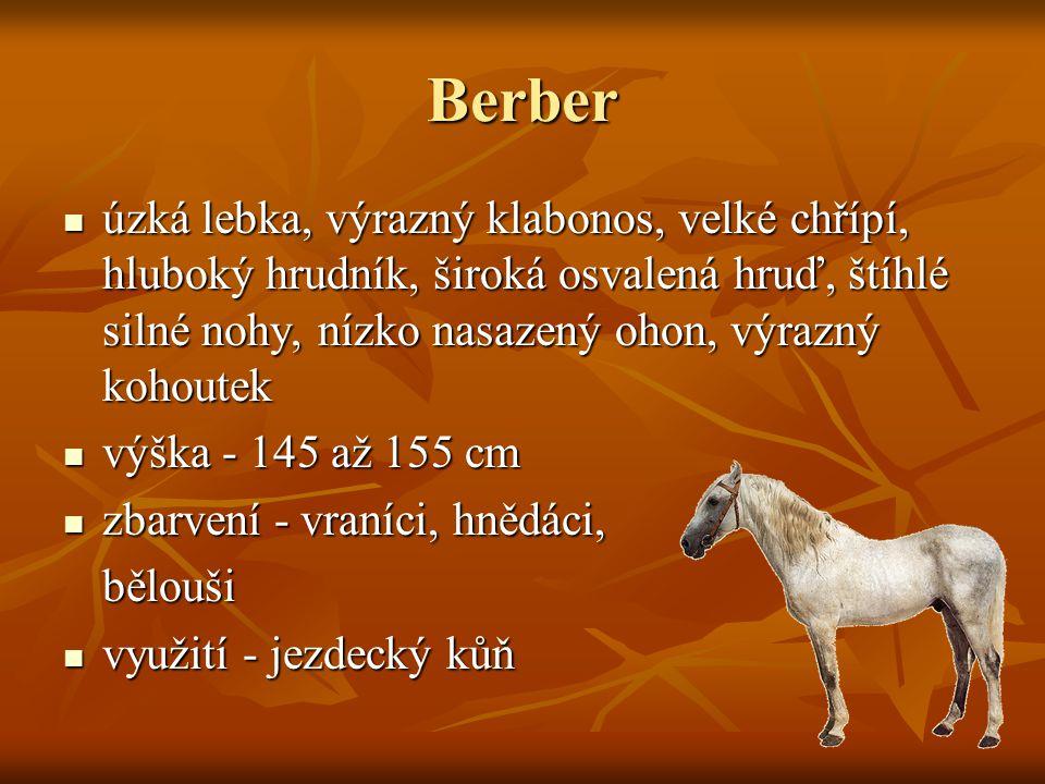Starokladrubský kůň vyšlechtěn v hřebčíně Kladruby nad Labem v roce 1579 vyšlechtěn v hřebčíně Kladruby nad Labem v roce 1579 těžká, klabonosá hlava, silný, vysoko nasazený krk, nevýrazný kohoutek, dlouhý hřbet, široká záď, vysoko nasazený ocas těžká, klabonosá hlava, silný, vysoko nasazený krk, nevýrazný kohoutek, dlouhý hřbet, široká záď, vysoko nasazený ocas výška - 175 až 180 cm výška - 175 až 180 cm zbarvení – bělouš, vraník zbarvení – bělouš, vraník využití - hlavně kočárový kůň využití - hlavně kočárový kůň