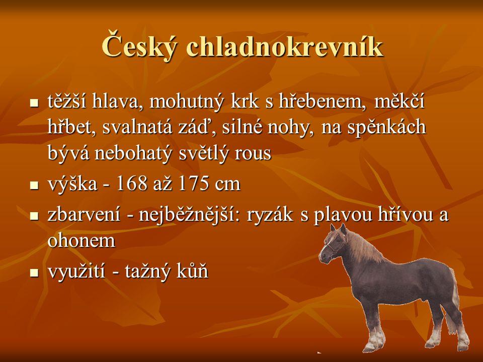 Český chladnokrevník těžší hlava, mohutný krk s hřebenem, měkčí hřbet, svalnatá záď, silné nohy, na spěnkách bývá nebohatý světlý rous těžší hlava, mohutný krk s hřebenem, měkčí hřbet, svalnatá záď, silné nohy, na spěnkách bývá nebohatý světlý rous výška - 168 až 175 cm výška - 168 až 175 cm zbarvení - nejběžnější: ryzák s plavou hřívou a ohonem zbarvení - nejběžnější: ryzák s plavou hřívou a ohonem využití - tažný kůň využití - tažný kůň