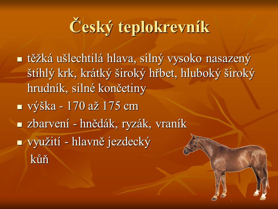 Český teplokrevník těžká ušlechtilá hlava, silný vysoko nasazený štíhlý krk, krátký široký hřbet, hluboký široký hrudník, silné končetiny těžká ušlechtilá hlava, silný vysoko nasazený štíhlý krk, krátký široký hřbet, hluboký široký hrudník, silné končetiny výška - 170 až 175 cm výška - 170 až 175 cm zbarvení - hnědák, ryzák, vraník zbarvení - hnědák, ryzák, vraník využití - hlavně jezdecký využití - hlavně jezdecký kůň kůň
