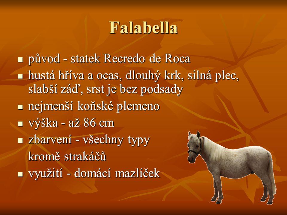 Falabella původ - statek Recredo de Roca původ - statek Recredo de Roca hustá hříva a ocas, dlouhý krk, silná plec, slabší záď, srst je bez podsady hustá hříva a ocas, dlouhý krk, silná plec, slabší záď, srst je bez podsady nejmenší koňské plemeno nejmenší koňské plemeno výška - až 86 cm výška - až 86 cm zbarvení - všechny typy zbarvení - všechny typy kromě strakáčů využití - domácí mazlíček využití - domácí mazlíček