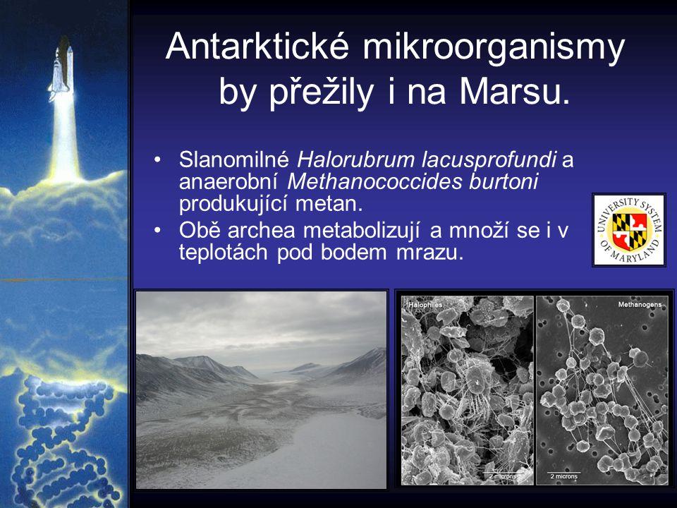 Antarktické mikroorganismy by přežily i na Marsu.