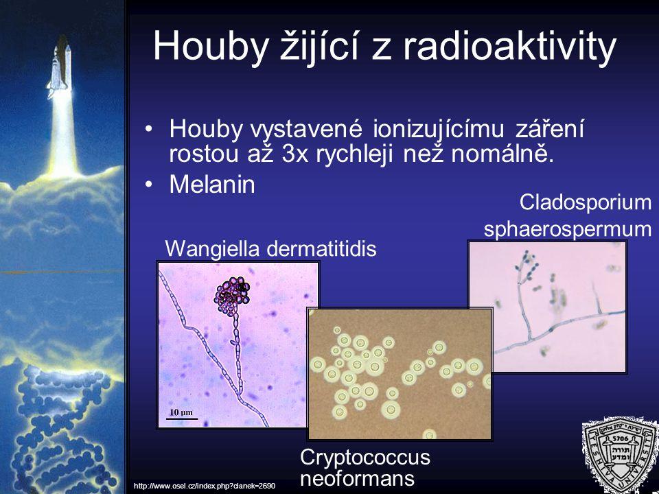 Houby žijící z radioaktivity Houby vystavené ionizujícímu záření rostou až 3x rychleji než nomálně. Melanin Cryptococcus neoformans Wangiella dermatit