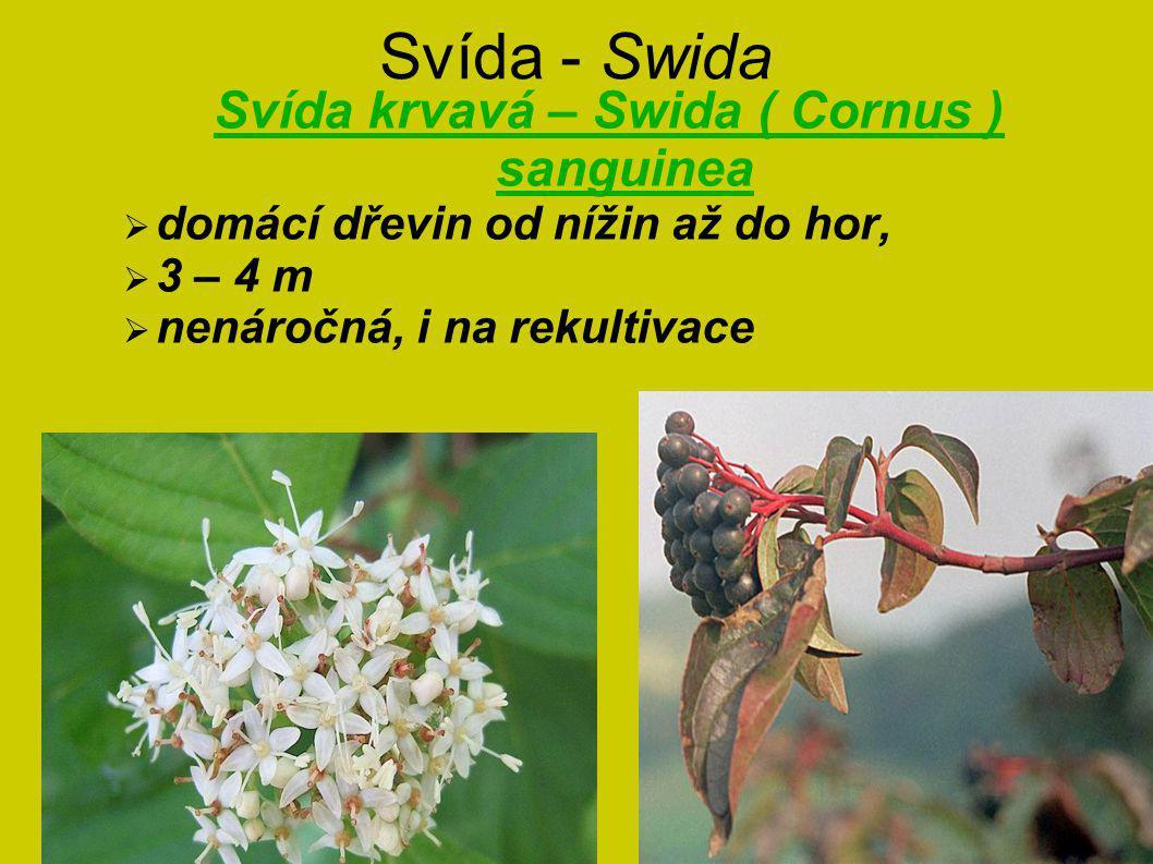 Svída - Swida Svída krvavá – Swida ( Cornus ) sanguinea  domácí dřevin od nížin až do hor,  3 – 4 m  nenáročná, i na rekultivace