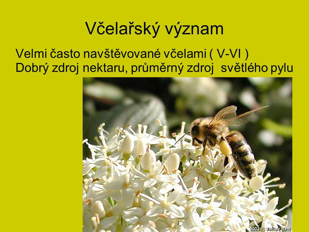 Včelařský význam Velmi často navštěvované včelami ( V-VI ) Dobrý zdroj nektaru, průměrný zdroj světlého pylu