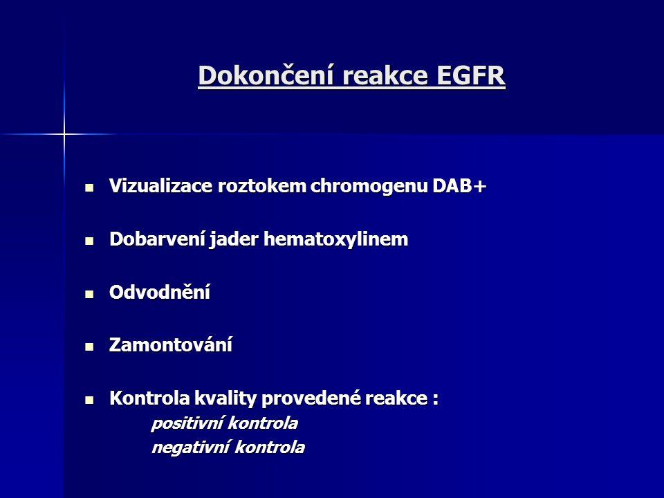 Dokončení reakce EGFR Vizualizace roztokem chromogenu DAB+ Vizualizace roztokem chromogenu DAB+ Dobarvení jader hematoxylinem Dobarvení jader hematoxy