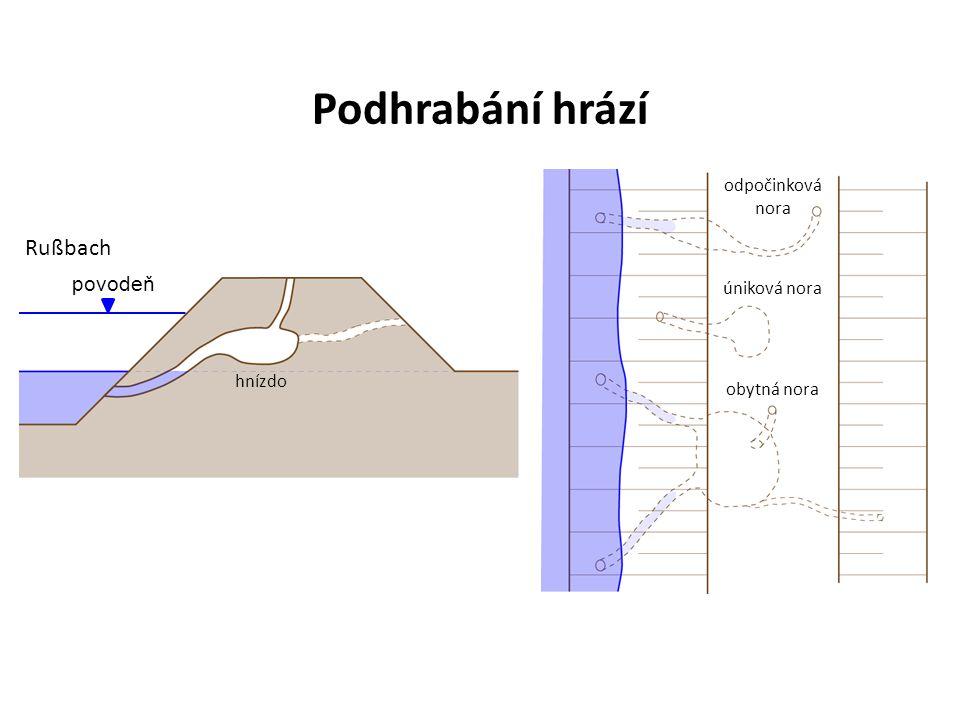 odpočinková nora úniková nora obytná nora hnízdo povodeň Rußbach Podhrabání hrází