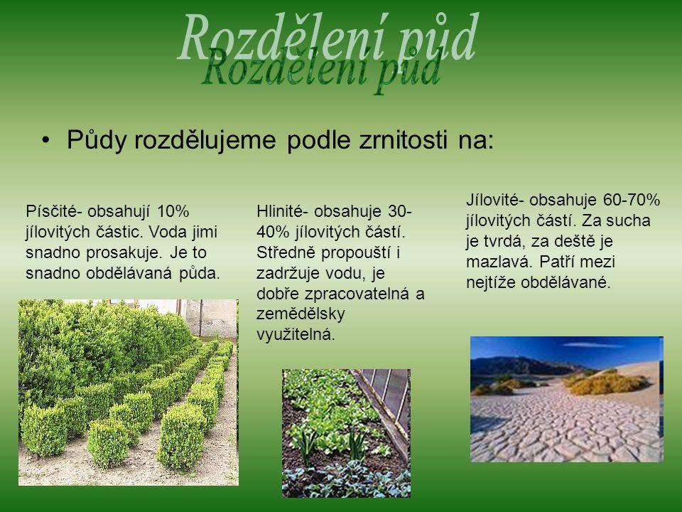Půdy rozdělujeme podle zrnitosti na: Písčité- obsahují 10% jílovitých částic.