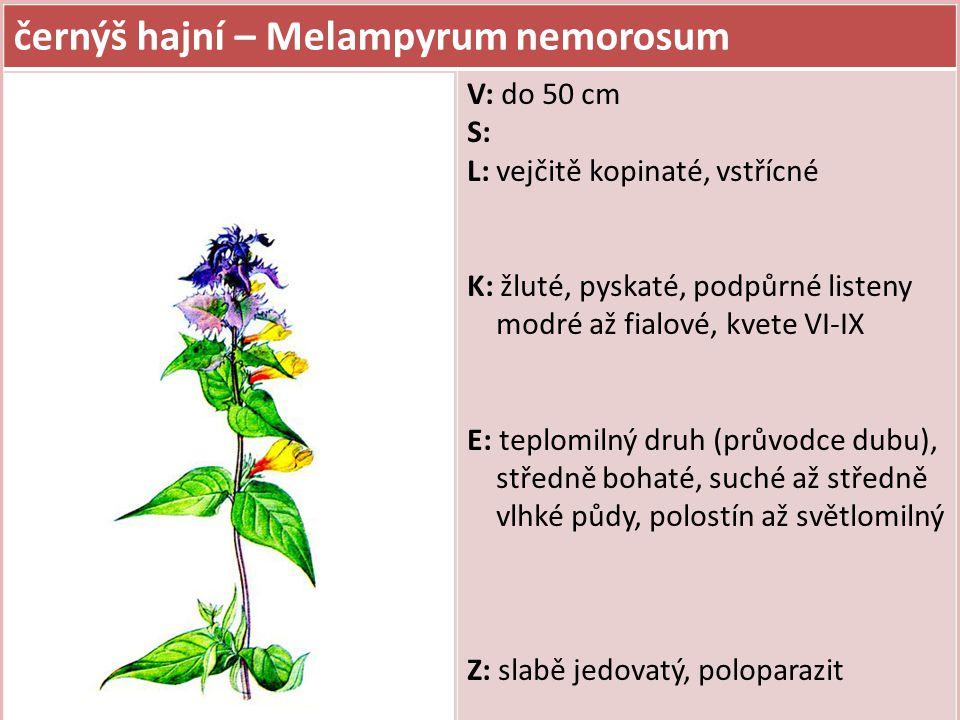 černýš hajní – Melampyrum nemorosum V: do 50 cm S: L: vejčitě kopinaté, vstřícné K: žluté, pyskaté, podpůrné listeny modré až fialové, kvete VI-IX E:
