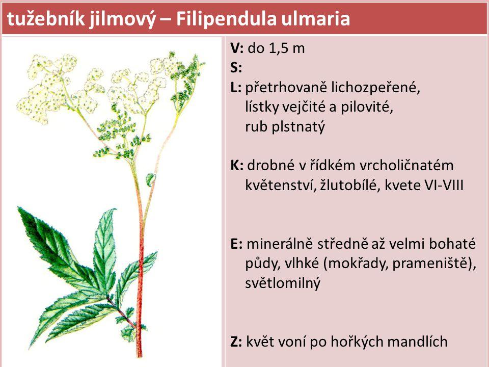 tužebník jilmový – Filipendula ulmaria V: do 1,5 m S: L: přetrhovaně lichozpeřené, lístky vejčité a pilovité, rub plstnatý K: drobné v řídkém vrcholič
