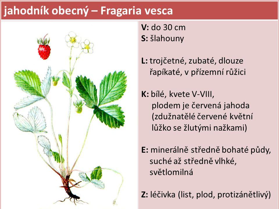 jahodník obecný – Fragaria vesca V: do 30 cm S: šlahouny L: trojčetné, zubaté, dlouze řapíkaté, v přízemní růžici K: bílé, kvete V-VIII, plodem je čer