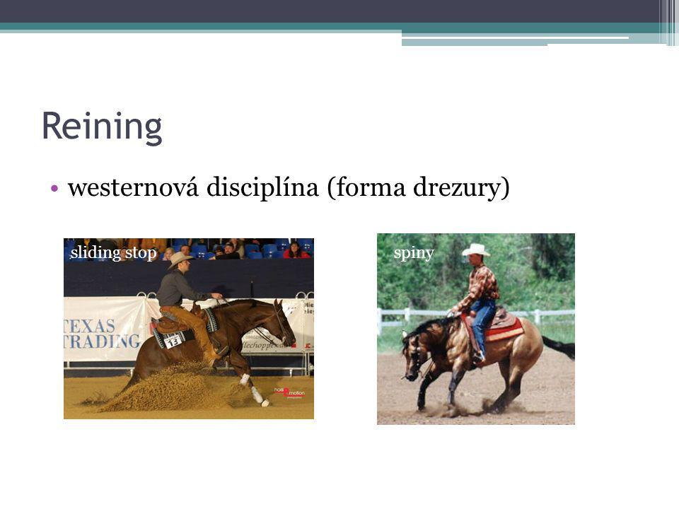 Reining sliding stop westernová disciplína (forma drezury) sliding stopspiny