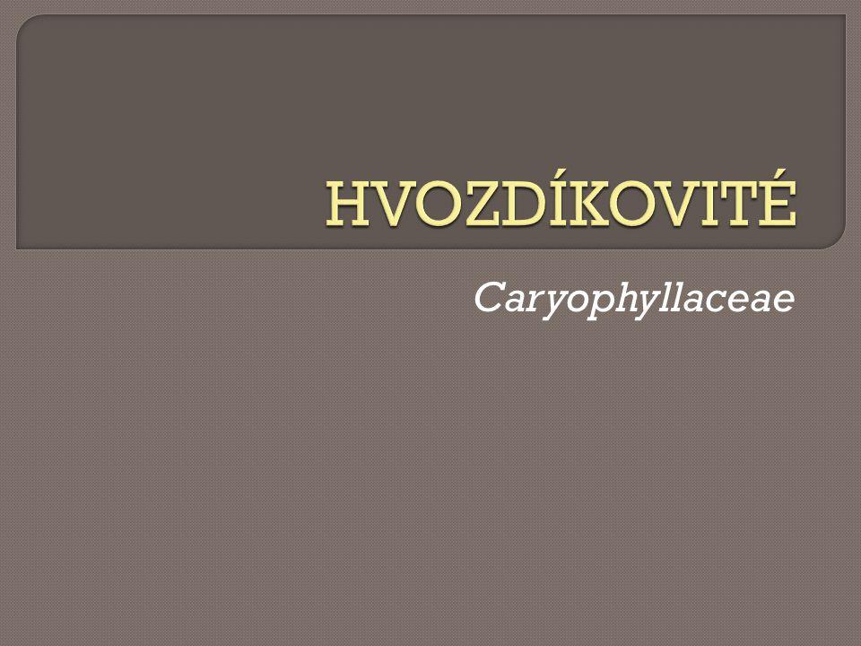 hojná plevelná rostlina  doba kv ě tu: b ř ezen - ř íjen http://www.kvetenacr.cz