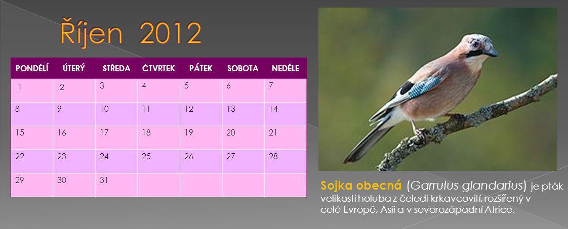 PONDĚLÍÚTERÝSTŘEDAČTVRTEKPÁTEKSOBOTANEDĚLE 12 34567 891011121314 15161718192021 22232425262728 293031 Sojka obecná (Garrulus glandarius) je pták velikosti holuba z čeledi krkavcovití, rozšířený v celé Evropě, Asii a v severozápadní Africe.