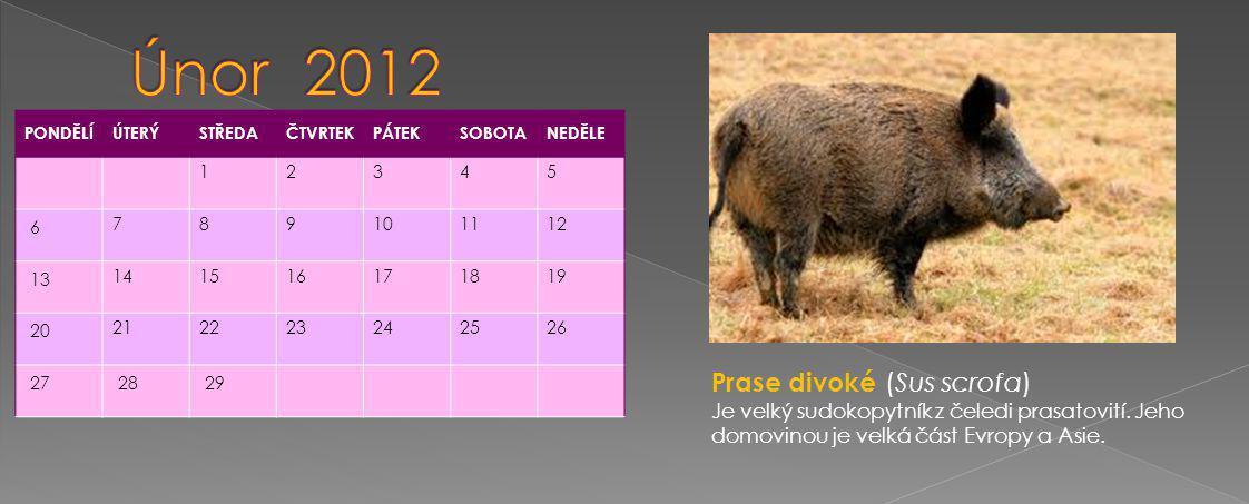 PONDĚLÍÚTERÝSTŘEDAČTVRTEKPÁTEKSOBOTANEDĚLE 1234 5 67891011 12 131415161718 19 202122232425 26 2728293031 Zajíc (Lepus) je rod savců z čeledi zajícovití.