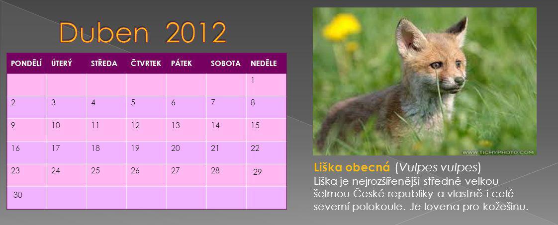 PONDĚLÍÚTERÝSTŘEDAČTVRTEKPÁTEKSOBOTANEDĚLE 1 2345678 9101112131415 16171819202122 232425262728 29 30 Liška obecná (Vulpes vulpes) Liška je nejrozšířenější středně velkou šelmou České republiky a vlastně i celé severní polokoule.