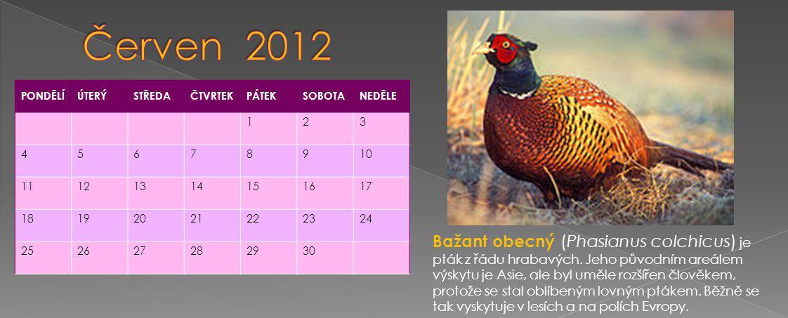 PONDĚLÍÚTERÝSTŘEDAČTVRTEKPÁTEKSOBOTANEDĚLE 123 45678910 11121314151617 18192021222324 252627282930 Bažant obecný (Phasianus colchicus) je pták z řádu hrabavých.