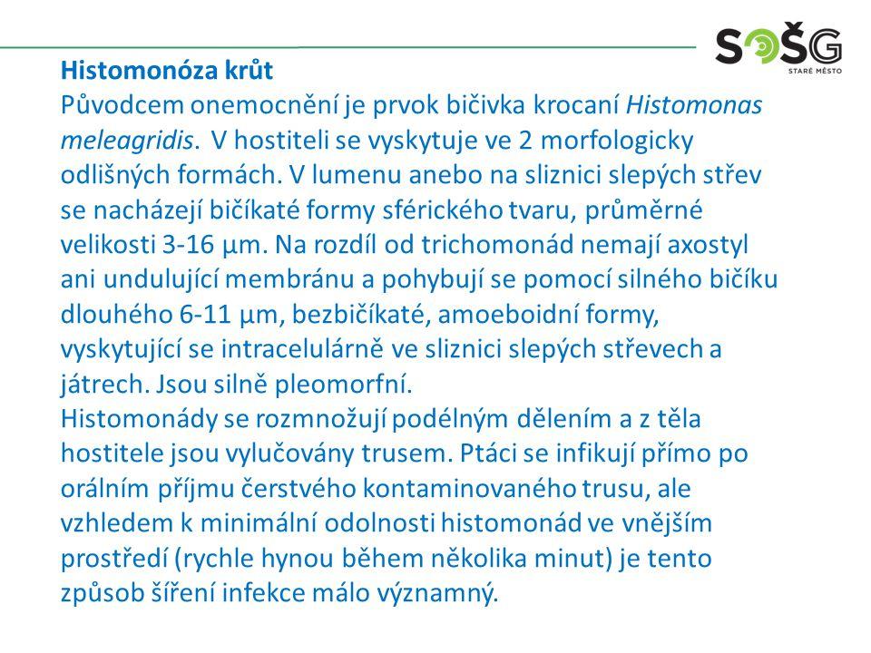 Histomonóza krůt Původcem onemocnění je prvok bičivka krocaní Histomonas meleagridis. V hostiteli se vyskytuje ve 2 morfologicky odlišných formách. V
