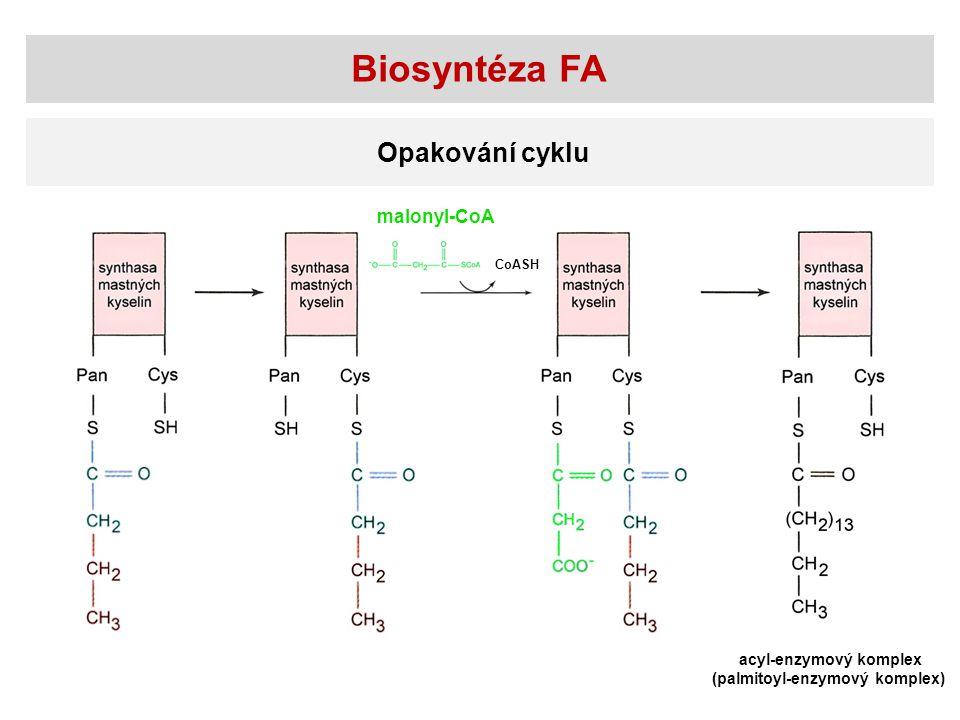 Biosyntéza FA Opakování cyklu acyl-enzymový komplex (palmitoyl-enzymový komplex) CoASH malonyl-CoA