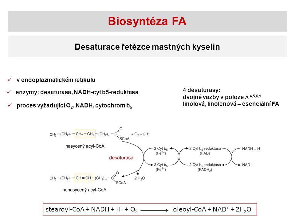 Biosyntéza FA Desaturace řetězce mastných kyselin v endoplazmatickém retikulu proces vyžadující O 2, NADH, cytochrom b 5 enzymy: desaturasa, NADH-cyt b5-reduktasa stearoyl-CoA + NADH + H + + O 2 oleoyl-CoA + NAD + + 2H 2 O 4 desaturasy: dvojné vazby v poloze  4,5,6,9 linolová, linolenová – esenciální FA