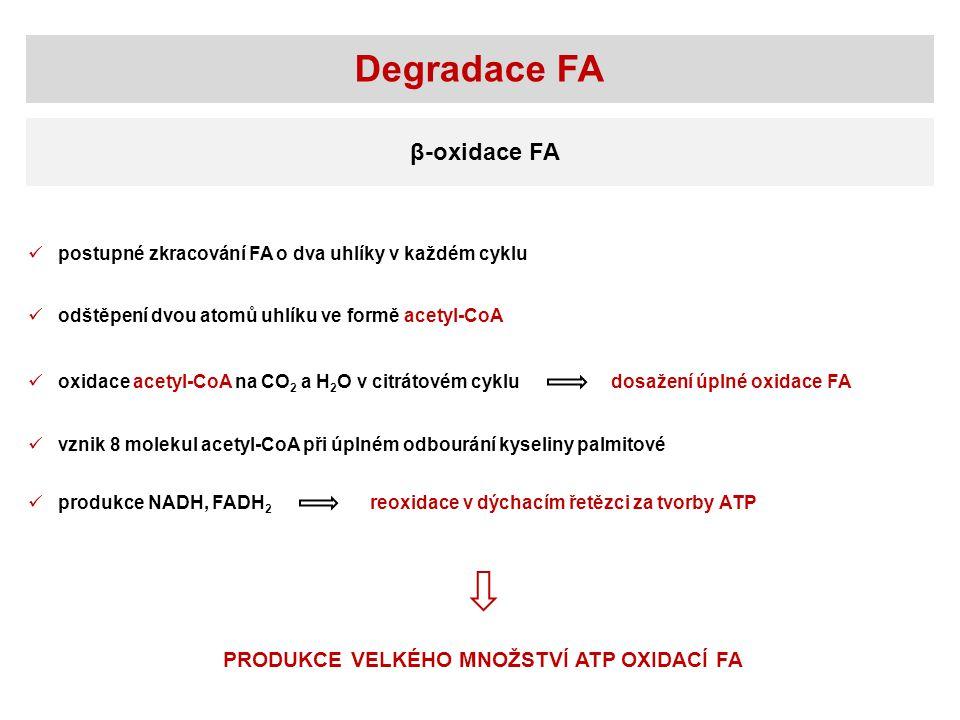 Degradace FA β-oxidace FA postupné zkracování FA o dva uhlíky v každém cyklu oxidace acetyl-CoA na CO 2 a H 2 O v citrátovém cyklu vznik 8 molekul acetyl-CoA při úplném odbourání kyseliny palmitové odštěpení dvou atomů uhlíku ve formě acetyl-CoA dosažení úplné oxidace FA PRODUKCE VELKÉHO MNOŽSTVÍ ATP OXIDACÍ FA produkce NADH, FADH 2 reoxidace v dýchacím řetězci za tvorby ATP