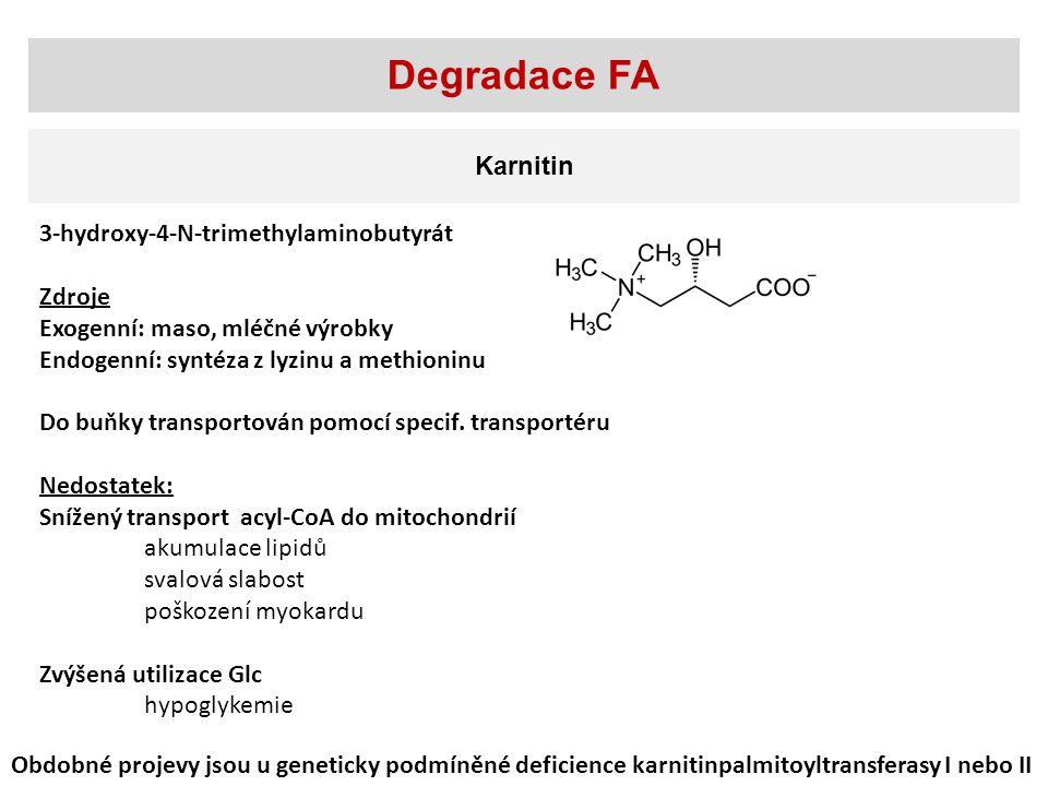 Karnitin Degradace FA 3-hydroxy-4-N-trimethylaminobutyrát Zdroje Exogenní: maso, mléčné výrobky Endogenní: syntéza z lyzinu a methioninu Do buňky transportován pomocí specif.