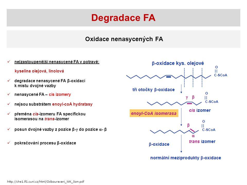 Oxidace nenasycených FA nejzastoupenější nenasycené FA v potravě: degradace nenasycené FA β-oxidací k místu dvojné vazby přeměna cis-izomeru FA specifickou isomerasou na trans-izomer pokračování procesu β-oxidace Degradace FA kyselina olejová, linolová posun dvojné vazby z pozice β-  do pozice  - β nenasycené FA – cis izomery nejsou substrátem enoyl-coA hydratasy http://che1.lf1.cuni.cz/html/Odbouravani_MK_3sm.pdf