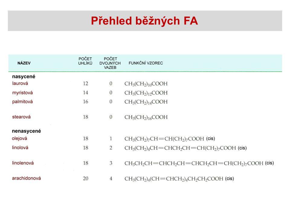 Biosyntéza FA Uvolnění palmitátu palmitoyl-enzymový komplex + palmitát thioesterasa H2OH2O