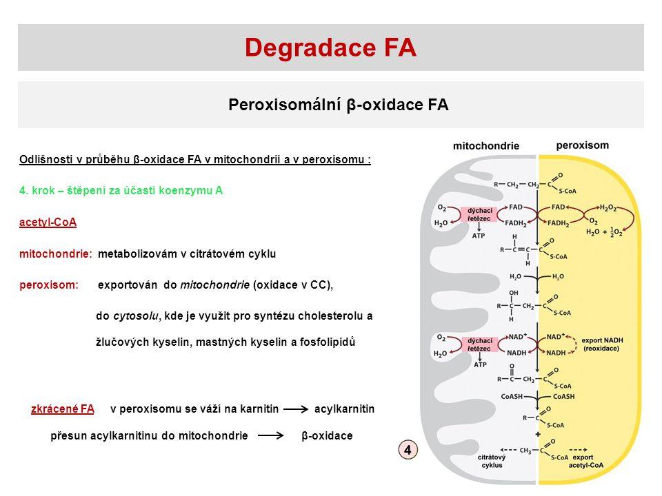 Degradace FA Peroxisomální β-oxidace FA Odlišnosti v průběhu β-oxidace FA v mitochondrii a v peroxisomu : 4.