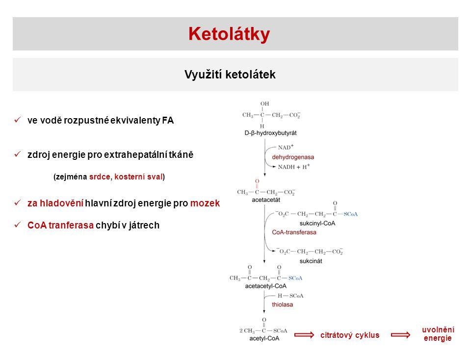 Ketolátky Využití ketolátek citrátový cyklus zdroj energie pro extrahepatální tkáně (zejména srdce, kosterní sval) za hladovění hlavní zdroj energie pro mozek CoA tranferasa chybí v játrech uvolnění energie ve vodě rozpustné ekvivalenty FA