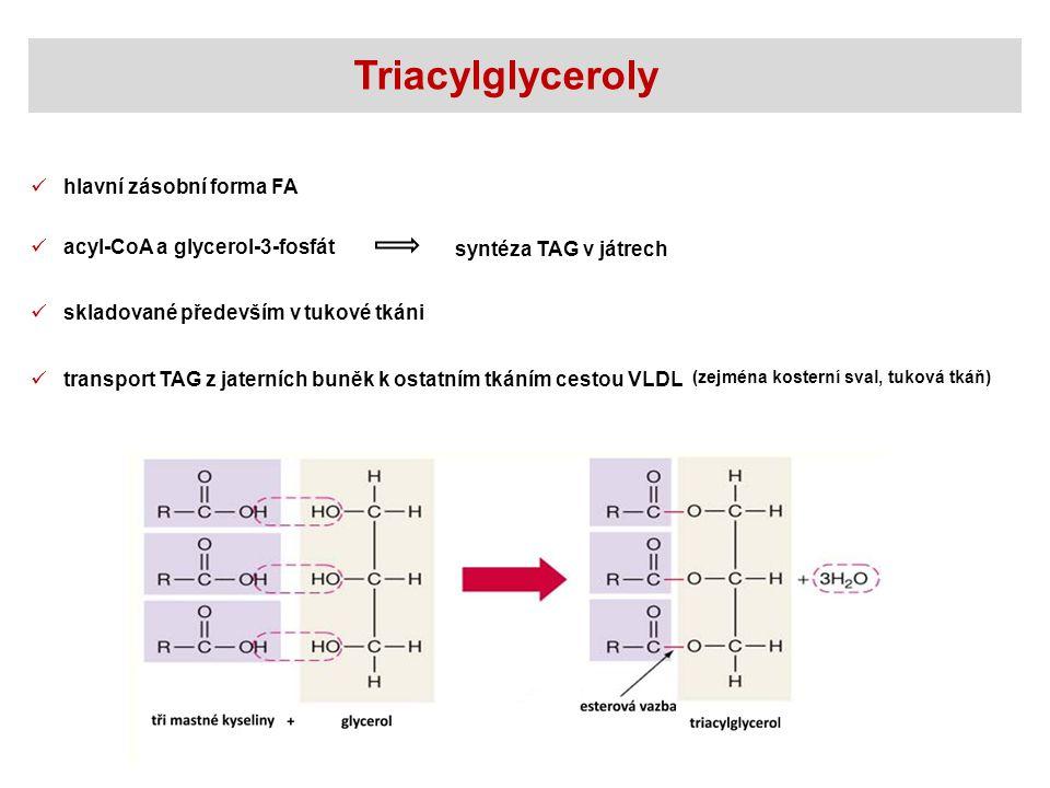 Triacylglyceroly hlavní zásobní forma FA skladované především v tukové tkáni acyl-CoA a glycerol-3-fosfát syntéza TAG v játrech transport TAG z jaterních buněk k ostatním tkáním cestou VLDL (zejména kosterní sval, tuková tkáň)
