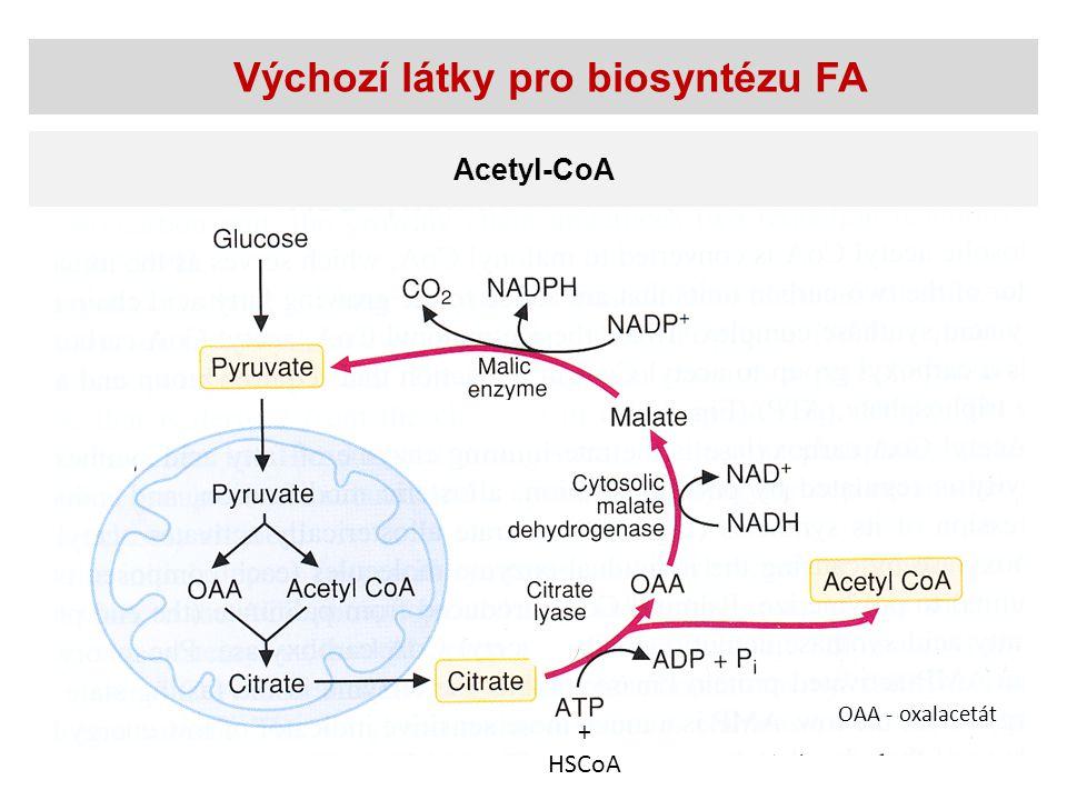 Biosyntéza FA - shrnutí Tvorba malonyl-CoA Acetyl-CoA-karboxylasa Vlastní syntéza FA  Kyselina palmitová Synthasa mastných kyselin – cytosol  Nasycené mastné kyseliny (>C16)  Elongační systémy- mitochondrie, ER  Nenasycené mastné kyseliny  Desaturační systémy - ER