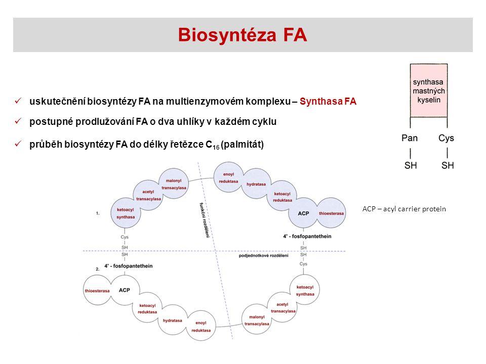 postupné prodlužování FA o dva uhlíky v každém cyklu Biosyntéza FA uskutečnění biosyntézy FA na multienzymovém komplexu – Synthasa FA průběh biosyntézy FA do délky řetězce C 16 (palmitát) ACP – acyl carrier protein