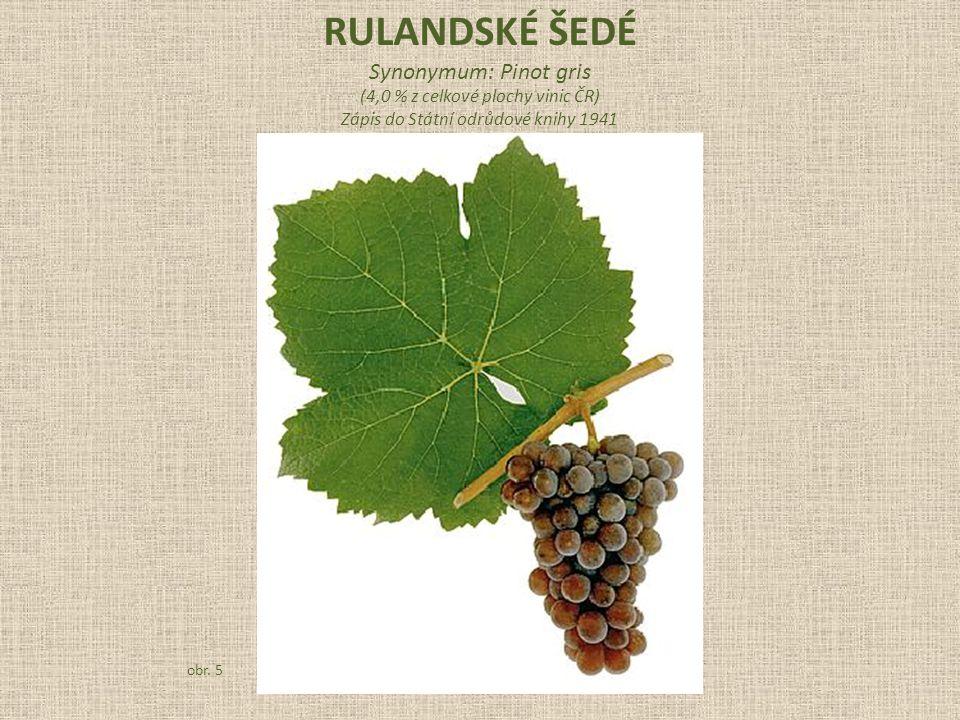 Synonymum: Pinot gris (4,0 % z celkové plochy vinic ČR) Zápis do Státní odrůdové knihy 1941 obr. 5