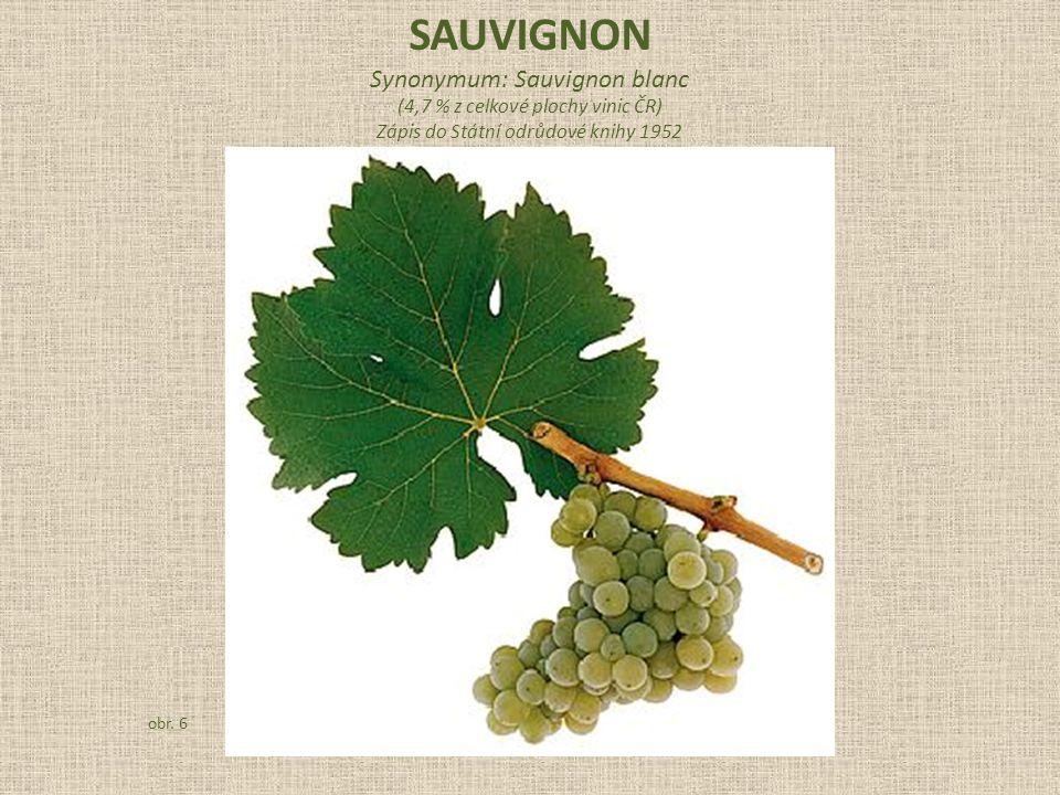 Synonymum: Sauvignon blanc (4,7 % z celkové plochy vinic ČR) Zápis do Státní odrůdové knihy 1952 obr.