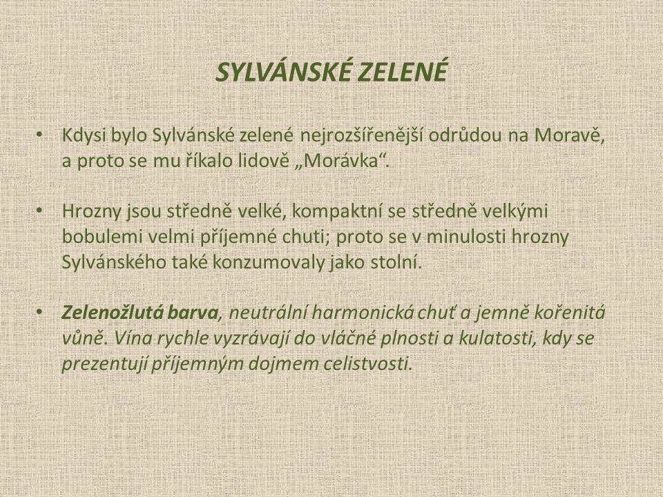 """Kdysi bylo Sylvánské zelené nejrozšířenější odrůdou na Moravě, a proto se mu říkalo lidově """"Morávka ."""