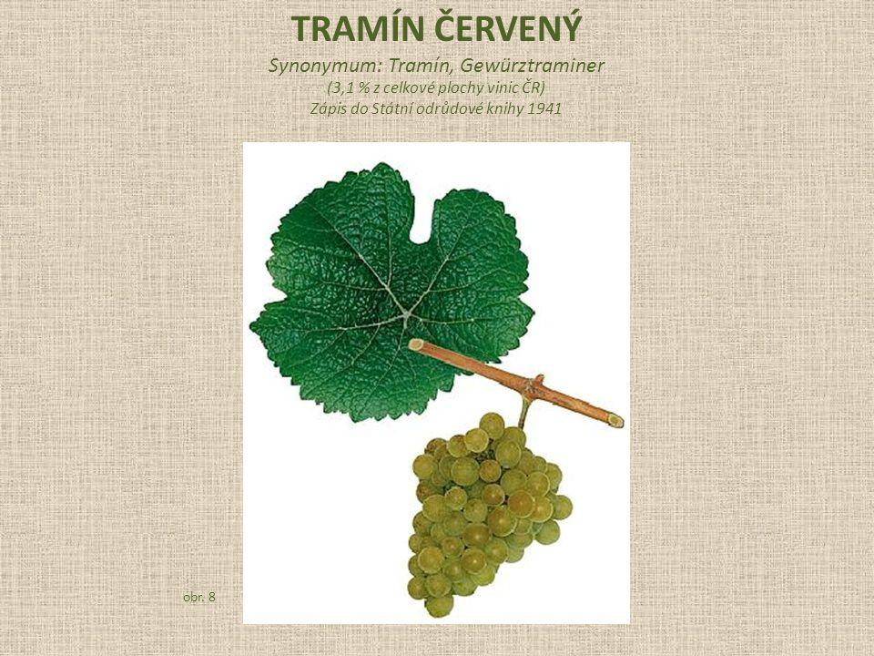 Synonymum: Tramín, Gewürztraminer (3,1 % z celkové plochy vinic ČR) Zápis do Státní odrůdové knihy 1941 obr.