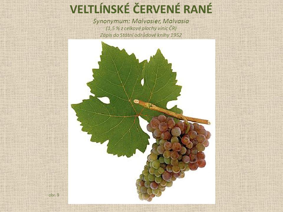 Synonymum: Malvasier, Malvasia (1,5 % z celkové plochy vinic ČR) Zápis do Státní odrůdové knihy 1952 obr.
