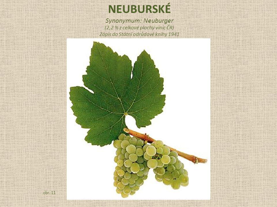 Synonymum: Neuburger (2,2 % z celkové plochy vinic ČR) Zápis do Státní odrůdové knihy 1941 obr. 11