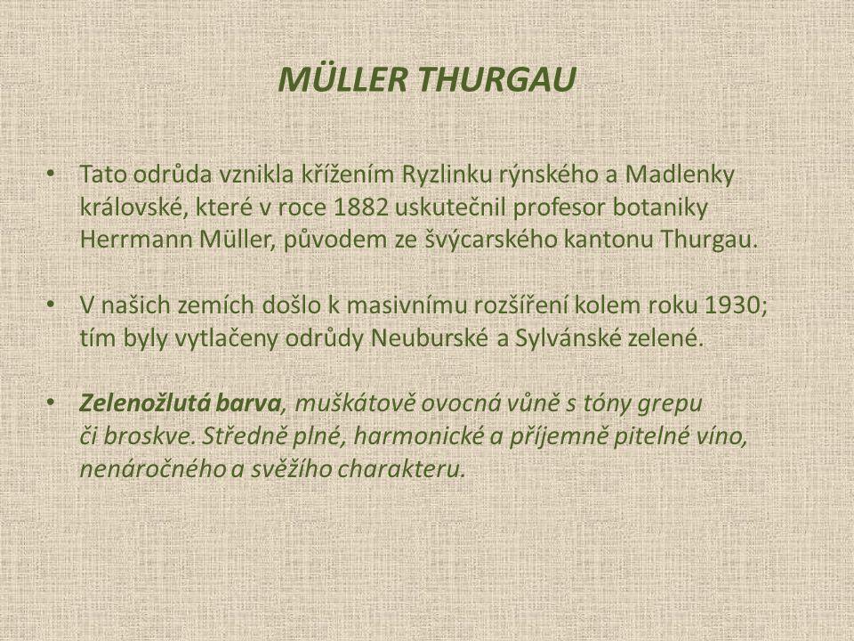 Tato odrůda vznikla křížením Ryzlinku rýnského a Madlenky královské, které v roce 1882 uskutečnil profesor botaniky Herrmann Müller, původem ze švýcarského kantonu Thurgau.