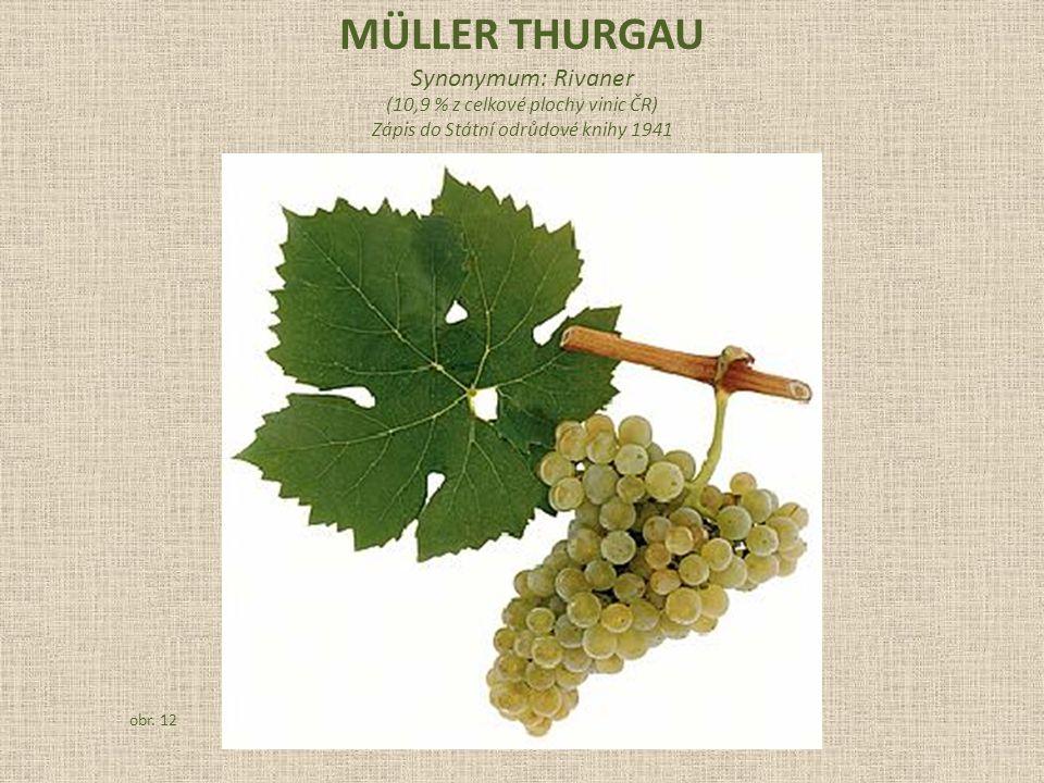 Synonymum: Rivaner (10,9 % z celkové plochy vinic ČR) Zápis do Státní odrůdové knihy 1941 obr. 12