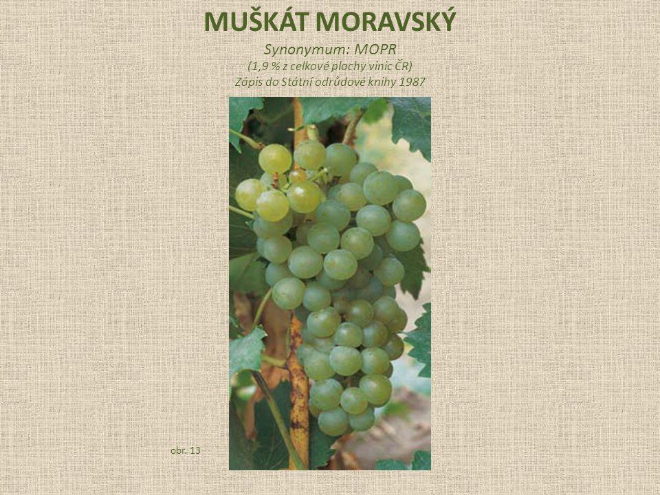 Synonymum: MOPR (1,9 % z celkové plochy vinic ČR) Zápis do Státní odrůdové knihy 1987 obr. 13
