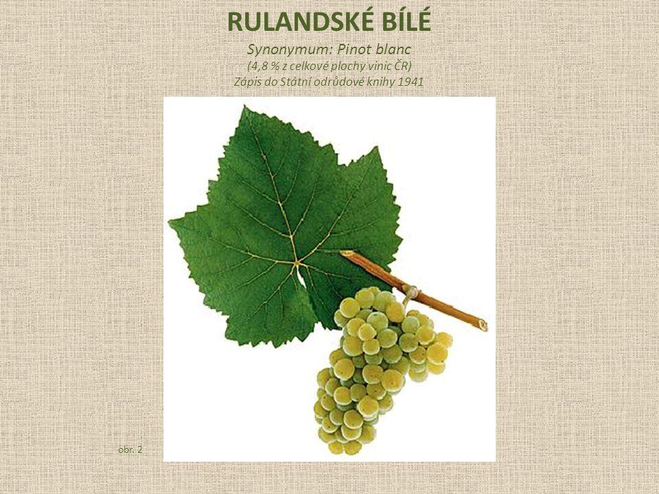 Synonymum: Pinot blanc (4,8 % z celkové plochy vinic ČR) Zápis do Státní odrůdové knihy 1941 obr. 2