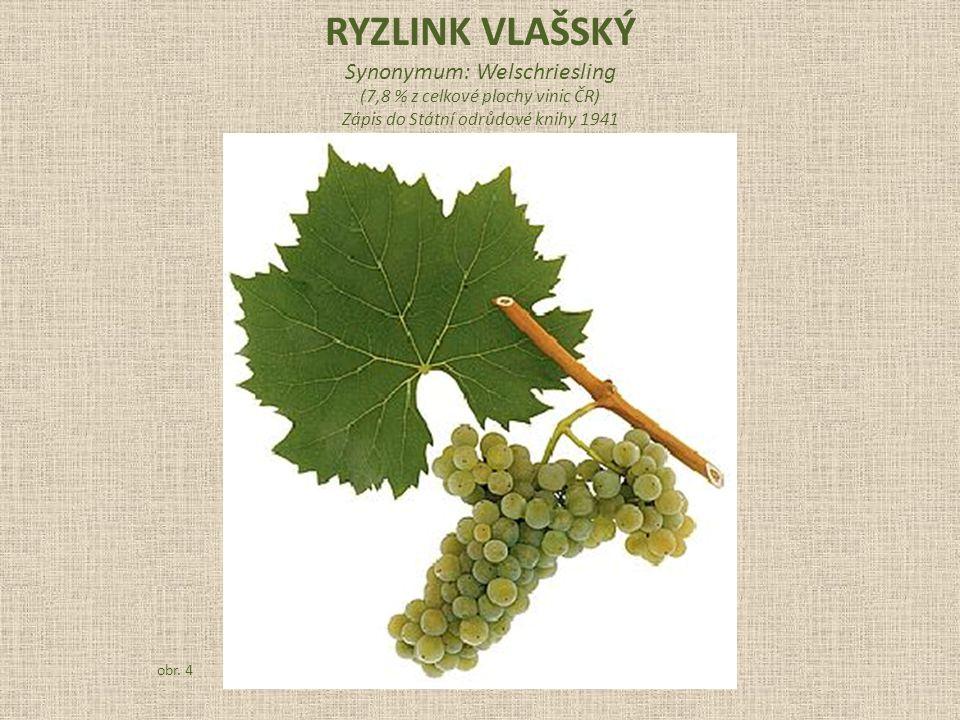 RYZLINK VLAŠSKÝ Synonymum: Welschriesling (7,8 % z celkové plochy vinic ČR) Zápis do Státní odrůdové knihy 1941 obr.