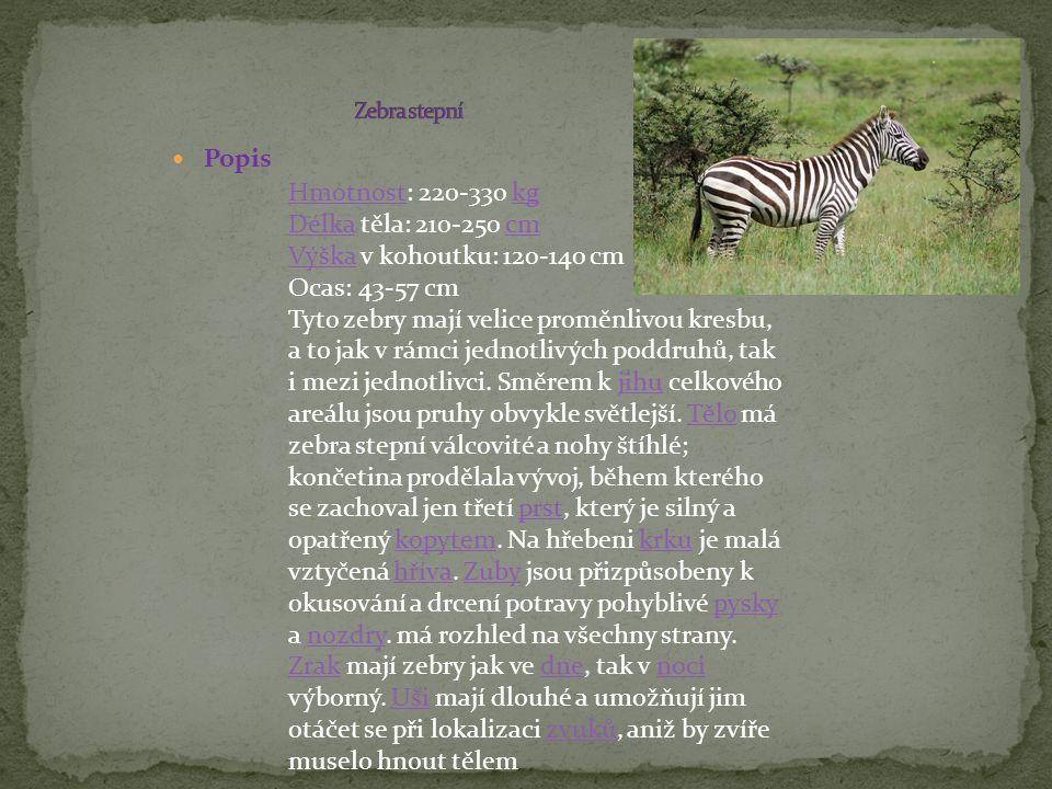 Popis HmotnostHmotnost: 220-330 kgkg DélkaDélka těla: 210-250 cmcm VýškaVýška v kohoutku: 120-140 cm Ocas: 43-57 cm Tyto zebry mají velice proměnlivou