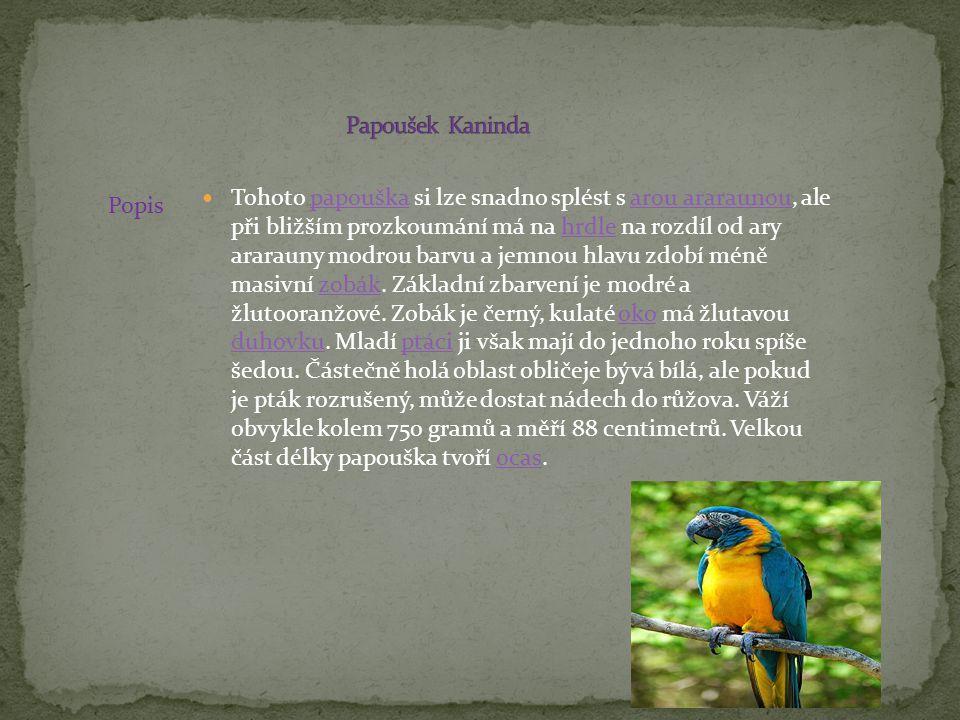 Tohoto papouška si lze snadno splést s arou araraunou, ale při bližším prozkoumání má na hrdle na rozdíl od ary ararauny modrou barvu a jemnou hlavu z