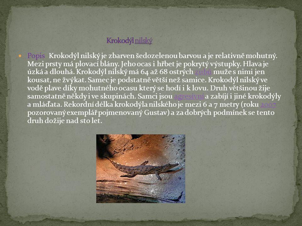 Popis Krokodýl nilský je zbarven šedozelenou barvou a je relativně mohutný. Mezi prsty má plovací blány. Jeho ocas i hřbet je pokrytý výstupky. Hlava
