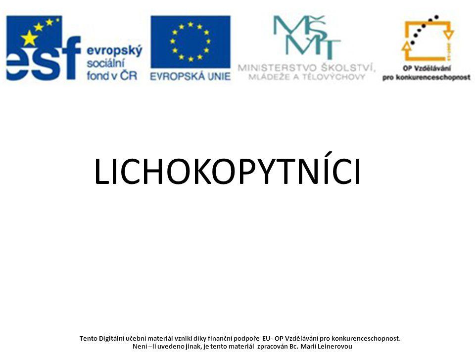www.easytoys.cz www.search.icq.com